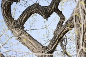 Heart shaped tree - Natascha Hagen